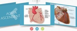 Fichas de Resumen para el ENARM Corazón