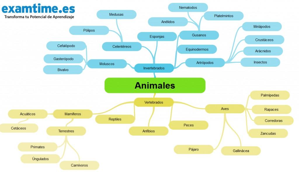 Cómo Estudiar Biología: 5 Técnicas para ser el Rey del Reino Animal