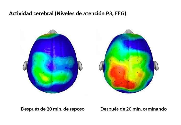 Actividad Cerebral - Hábitos de Estudio